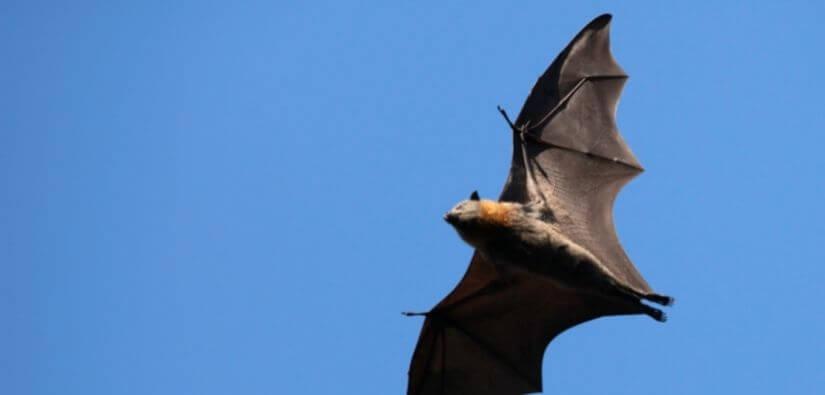 Call Grade a Critter for Wildlife Removal in Canton, Georgia!